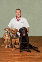 Dr. David Mears, DVM Doctor of Veterinary Medicine at Shiloh Veterinary Clinic in Illinois